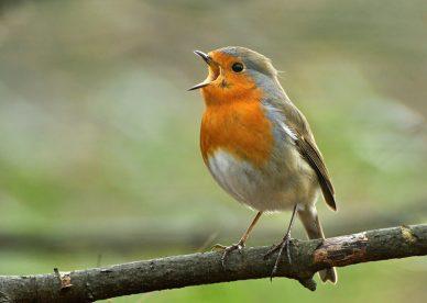 صور طيور حزينة اناديك ولم تجيب