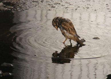 لا مجال للنجاة صور طيور