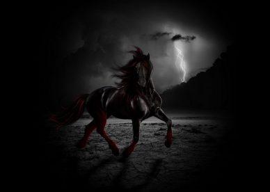 من اروع واجمل صور الخيول