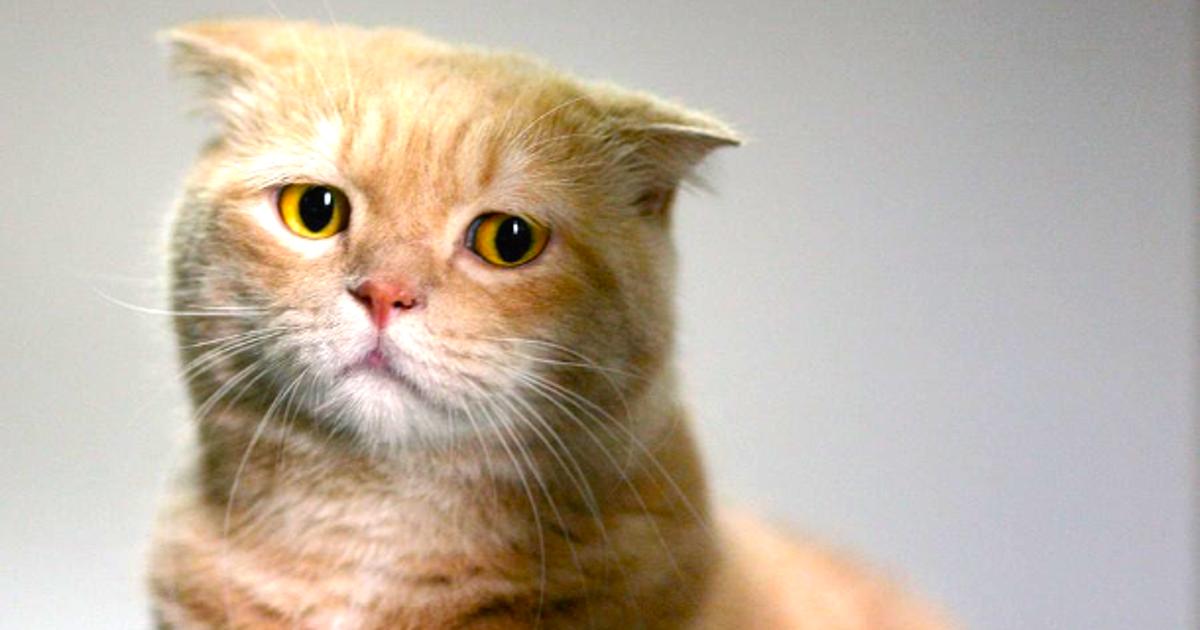 صور قطط حزينة جدا Sad Cats صور حزينة Sad Images