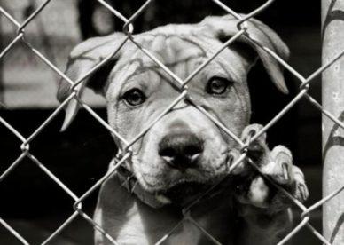 حيوانات حزينة - sad animals