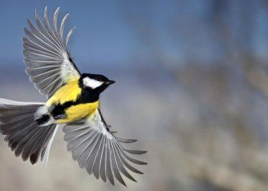 صور طيور حان وقت الرحيل